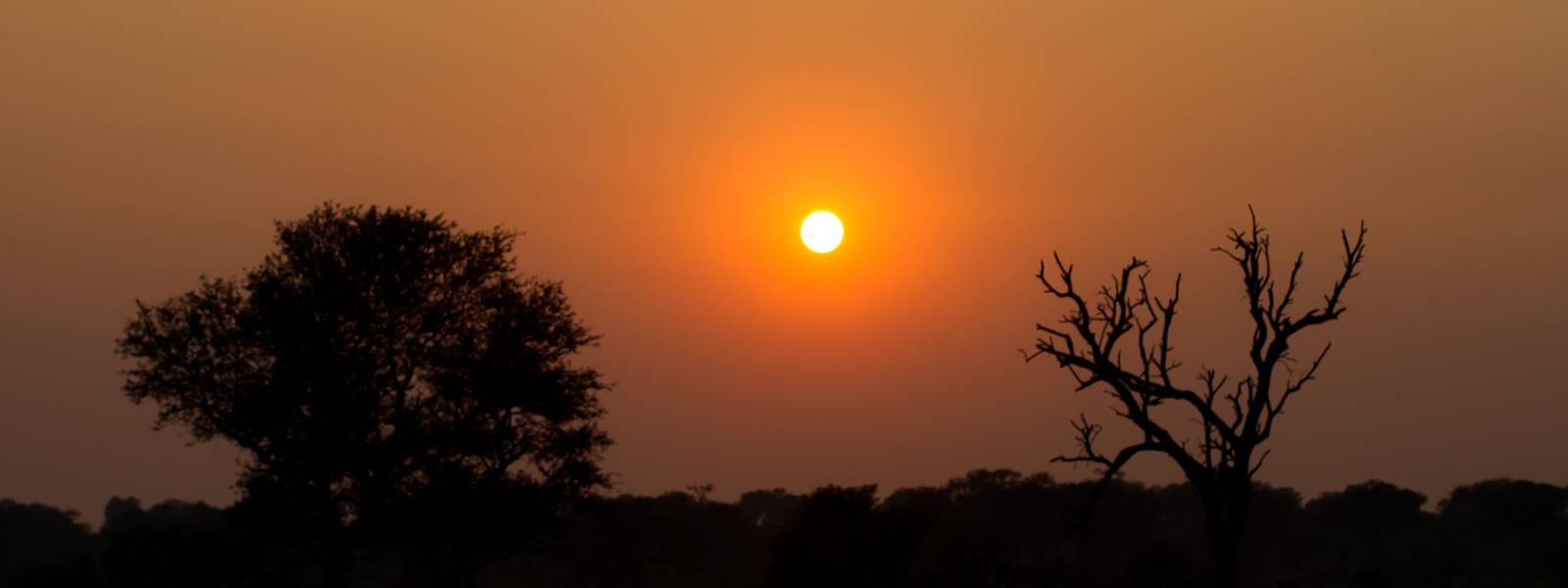 SUDÁFRICA II: ¿DÓNDE ESTÁN LOS LEONES DE KRUGER?
